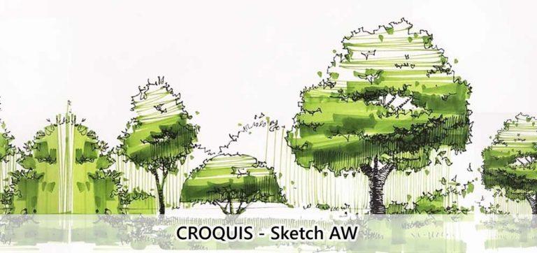 croquis-arboles-sketch-aw
